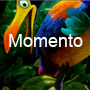Momento Premium WordPress Theme