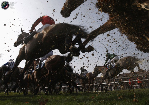 Cheltenham-Festival-horse-r