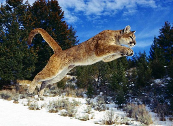 Amazing-Animals-Jumping-(16