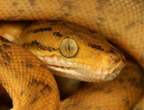 snake_macro_by_macrojunkie