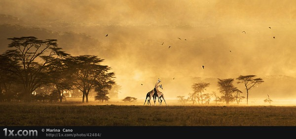giraffe-at-dusk